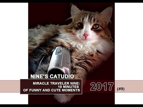 Norwegian Forest Cat Kitten Nine Survives and Grows  2017