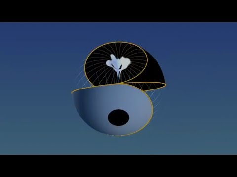 Yin Yang mapped onto Torus