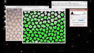 How to do Image Thresholding in ImageJ