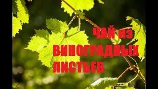 147. Ферментированные листья ВИНОГРАДА как каркаде) Сушка, купажирование трав