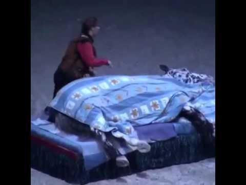 uyuyan at ile ilgili görsel sonucu