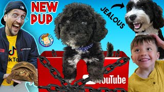 NEW PUPPY Surprise!  YOUTUBE Sent Us This BOX!! (FV Family Surprise Oreo's Brother Vlog)