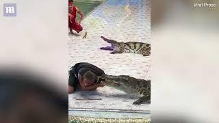 Крокодил во время шоу в Таиланде хватает дрессировщика за руку