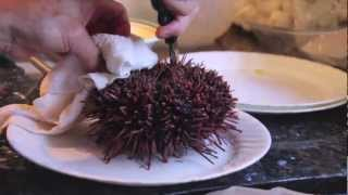 How to make Uni Sashimi (Sea Urchin)