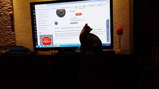 Our cat catches the cursor on the TV screen........Наш кот ловит курсор на ТВ экране