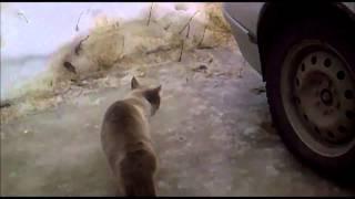 Коты охранники