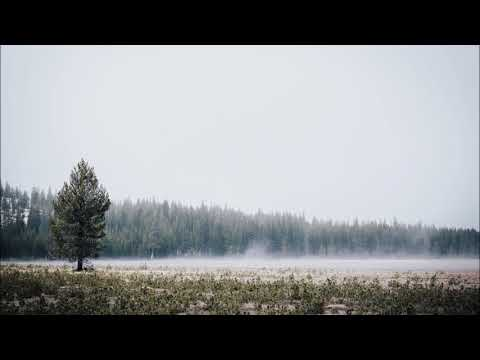 Lonely Tree- Indie/Folk/ Playlist, 2020
