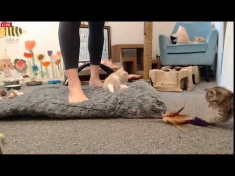 Tiny Kittens Shellys morning visit and small declawing discussion