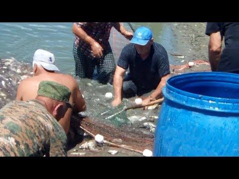 Спасение мальков рыбы на реке Терек