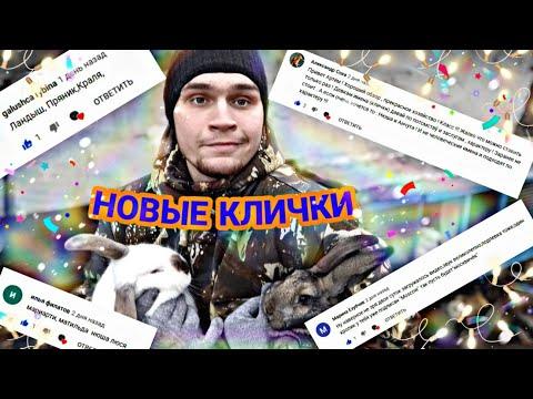 Новые КЛИЧКИ у кроликов // показал ВСЕХ КРОЛИКОВ //