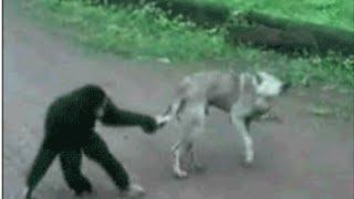 動物珍プレー好プレー 犬猫動物達のおもしろハプニング集 souce:barnora...