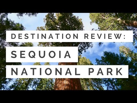 Sequoia National Park | Hiking Among the Oldest & Largest Trees in the World