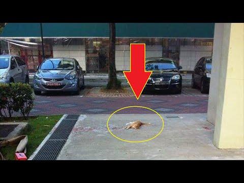 Парень бросился на помощь лежащему в крови коту, то что произошло дальше, не передать словами