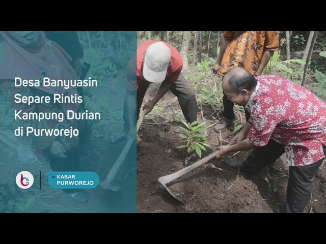Desa Banyuasin Separe Rintis Kampung Durian di Purworejo