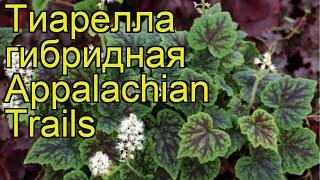 Тиарелла гибридная Аппалачская тропа. Краткий обзор, описание характеристик, где купить саженцы