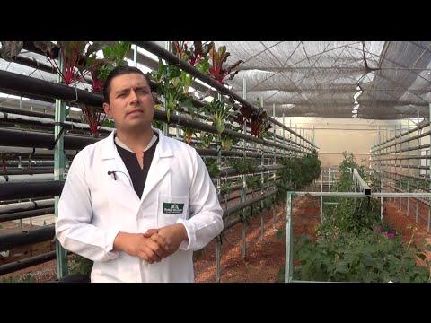 Casos de éxito de empresas de Alimentos en el Estado de México