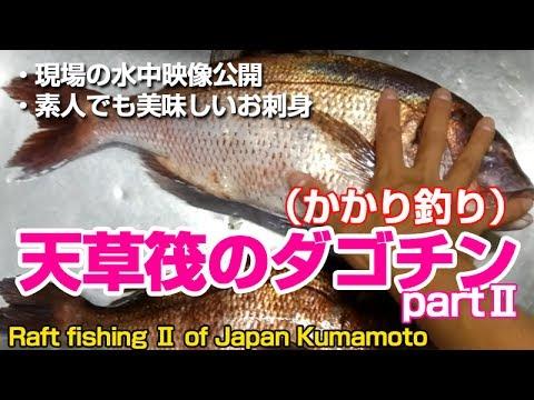 熊本天草最高♪ダゴチンで良型真鯛を狙う梅雨の筏でチヌ・黒鯛かかり釣りPart2 | Raft fishing in Kumamoto Prefecture, Japan 22
