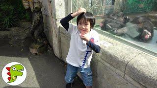 おでかけ 伊豆シャボテン動物公園へいったよ!カワウソにエサをあげたよ! トイキッズ