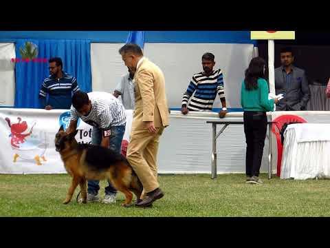 DOG SHOW AT KOLKATA 2018-19 BY CALCUTTA CANINE CLUB PART 2