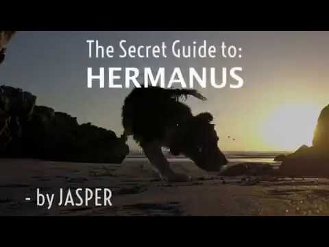 Jasper's Secret Travel Guide to Hermanus, Whale Coast South Africa