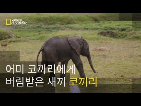 복잡한 감정을 가진 동물, 코끼리
