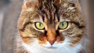 Как подобрать имя котёнку? | Всё о кошках #3