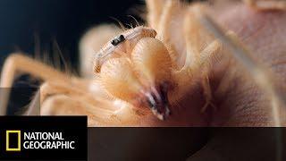 Węże, pająki i skorpiony...nie polecamy osobom o słabych nerwach!  [Wielka egipska wyprawa]