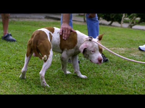 Get A Sneak Peek At The New Season Of Pit Bulls and Parolees!