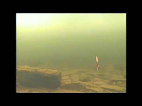 Underwater UV Forage Minnow Spoon