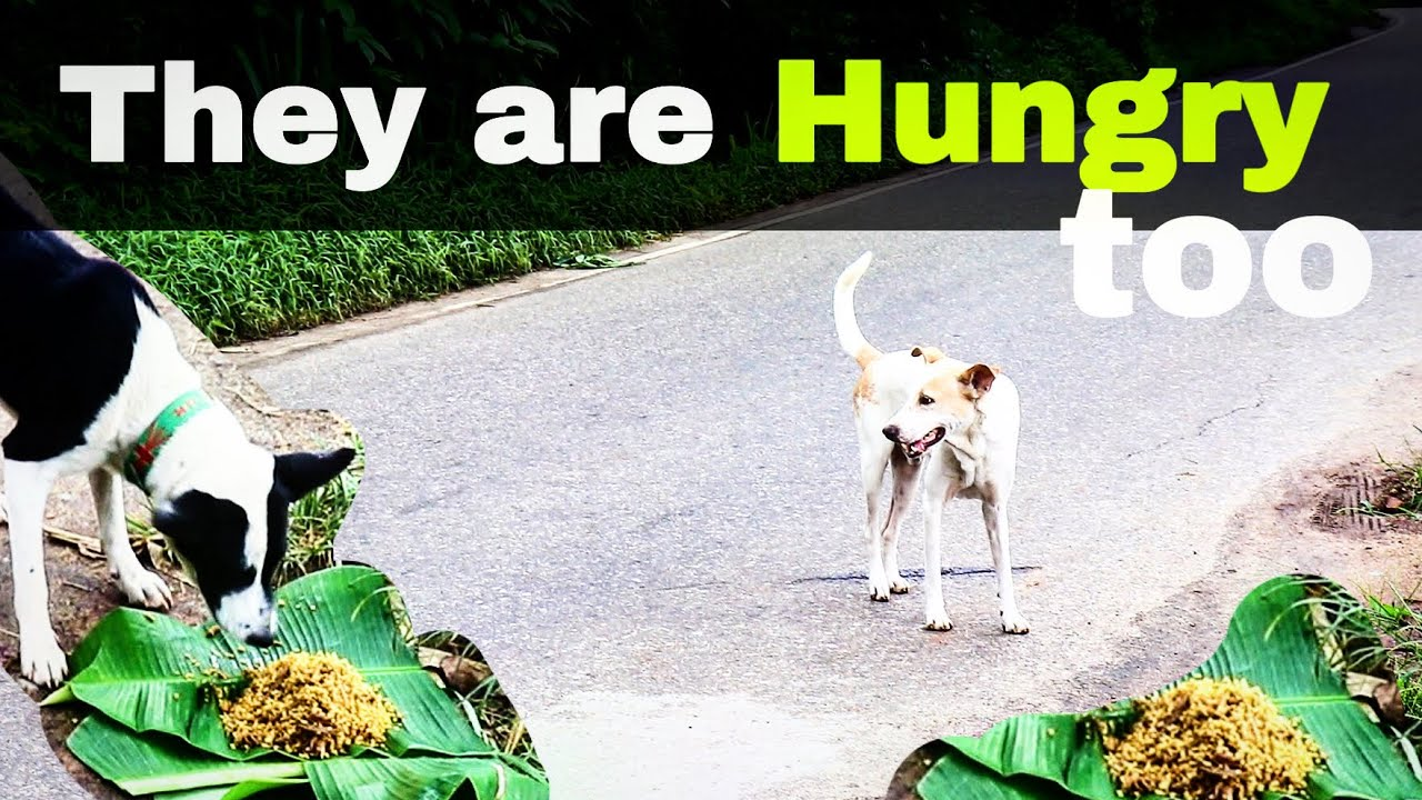 Dog Lovers | They are hungry too