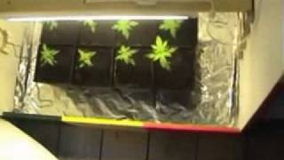 Awesome Marijuana Grow Room Built In A Closet - Fast, Cheap, And Easy! (1 Of 3)