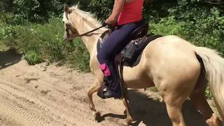 FOR SALE: BVF's Twenty-Four Karat Gold Gaited Mountain Horse Mare - Trail Riding August 2017