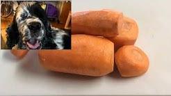 Olet nähnyt koiran syövän porkkanaa!
