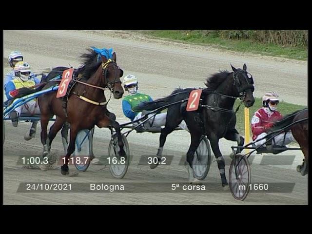 2021 10 24   Corsa 5   Metri 1660   Premio Lions Club Bologna G.marconi
