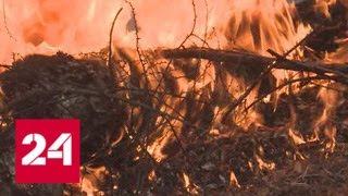 Смотреть видео В Забайкалье горит 18 тысяч гектаров леса - Россия 24 онлайн