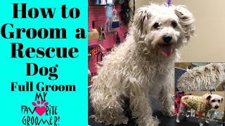 How to Groom a Rescue Dog