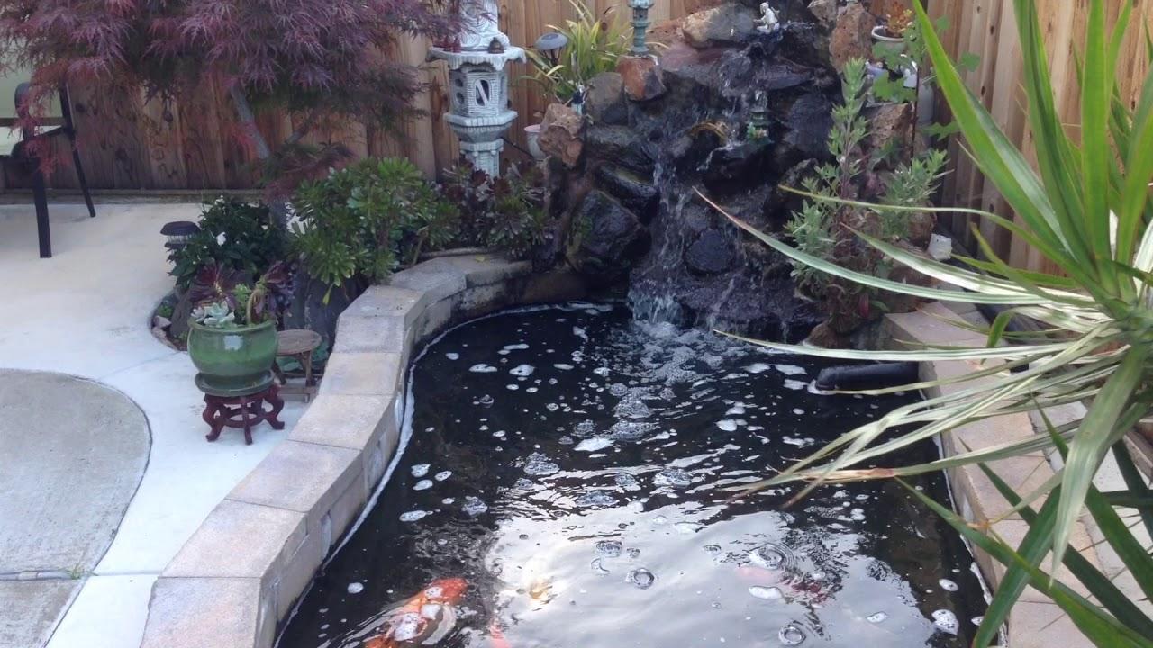 Small backyard with 1000 gallon koi pond youtube for Koi pond gallons