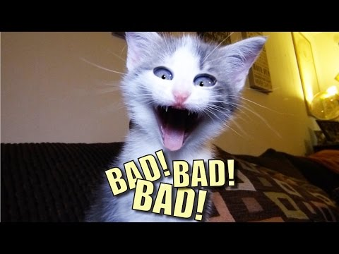 Thumbnail: Talking Kitty Cat 44 - BAD! BAD! BAD!