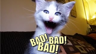 talking kitty cat 44 bad bad bad