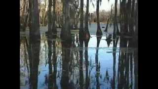 Magnolia Plantation - A Video Tour