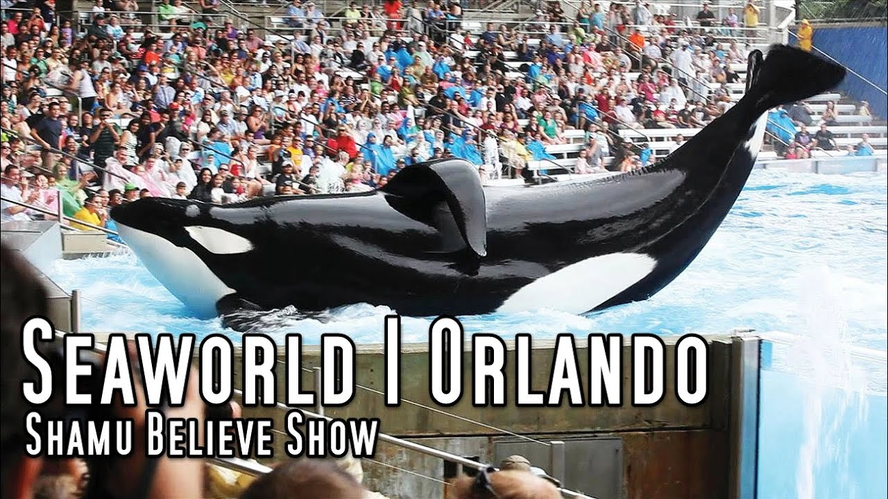 the complete seaworld shamu quotbelievequot show dawn brancheau