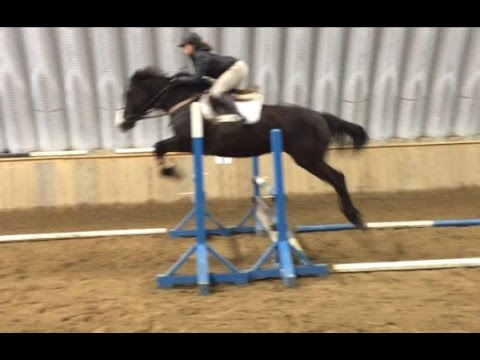 Miss Sixty, Warmblood Mare / 2010