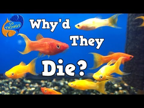 Why Do Fish Die? Top 10  Causes  Of Fish Death, 10 Things