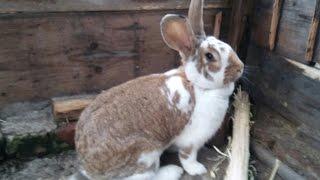 Historia mojego królika