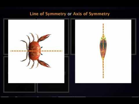 Symmetrical And Asymmetrical Figures