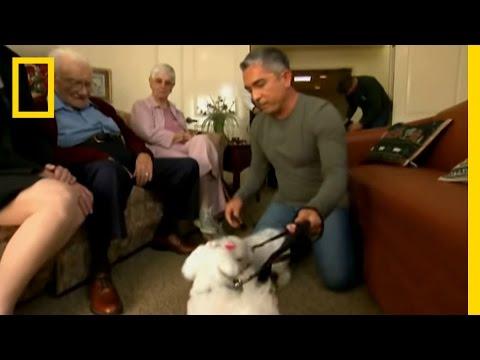 Retirement Terrors | Dog Whisperer