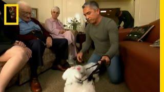 Dog Whisperer: Retirement Terrors
