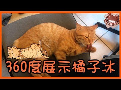 【巧克力】『橘子冰的日常』- 360度展示橘子冰 ฅ•ω•ฅ