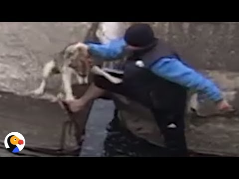Dog Rescued From Canal Is SO GRATEFUL | The Dodo