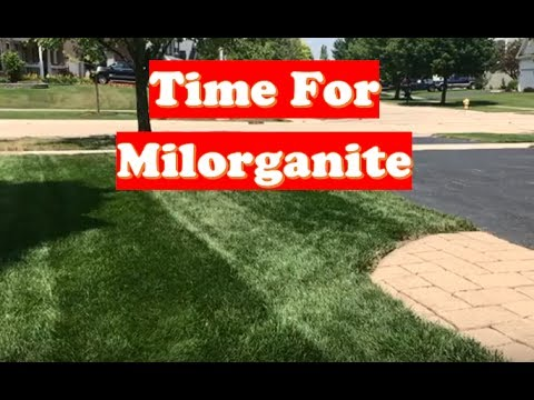 Repeat Best Fertilizer for Grass   4th of July with Milorganite